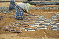 Women drying fish negombo sri lanka aug placing to dry in the sun on the beach in negombo on august Stock Image