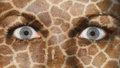 Women eye close up eyes wide open giraffe pattern Stock Photography