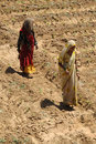 Women farmers fatehpur sikri india april th poor farm workers Royalty Free Stock Photo