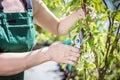 Women gardener cutting tree branch. Royalty Free Stock Photo