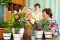 Women and girl near many flowerpots two mature Royalty Free Stock Images