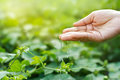 Women hand watering young plants in sunshine on nature background green Stock Photo