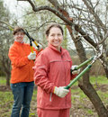 Women pruned branches in the orchard two spring Stock Image