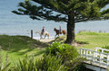Women ride horses hihii beach nz sep two on hihi beach on september it s a famous travel destination in northland new zealand Stock Photo