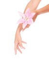 Women's hands with pink lily Royalty Free Stock Photo