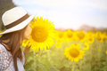 Women smells sunflower in nature Royalty Free Stock Photo