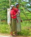 Women tea pickers Royalty Free Stock Photo