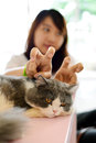 Women tease cat in back of persian it don t know what happen in behind Stock Photo