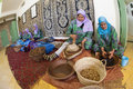 Women working in a cooperative feminine essaouira morocco february for the manufacturing of argan fruits essaouira morocco Stock Images