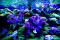 Wonderful and beautiful underwater world with corals and tropica Royalty Free Stock Photo