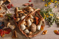 Wonderful colors of autumn studio photography beautiful leaves and mushrooms in wicker basket Royalty Free Stock Images