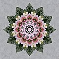 Flower Bouquet Seen Through Ka...