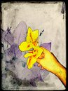 Wonderful flower i take it by mobile phone Royalty Free Stock Photography