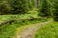 Wonderful forest path a at sumava national park czech republic Royalty Free Stock Photos