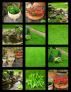 Wonderful garden Royalty Free Stock Images