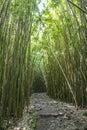 Wonderful path through tall bamboo trees, Maui, Hawaii Royalty Free Stock Photo