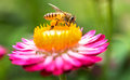 Wonderful photo of a beautiful bee and flowers a sunny day. Royalty Free Stock Photo