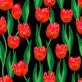 Wonderful. red tulips and amazing green leaves on a black background. Wonderful seamless pattern