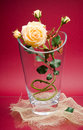 Wonderful rose in glass vase on marron Royalty Free Stock Photos