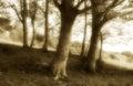 Wonderful Undergrowth, Old Fas...