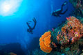 Wonderful underwater world with scuba divers on coral reef and a Royalty Free Stock Photo