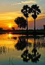 Wonderful vietnam rural sunrise landscape of asia impression silhouette of palm tree reflect on water sun at horizon beautiful Royalty Free Stock Photography