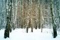 Wonderful winter forest photo fabulous a snowy Stock Photos