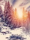 Wonderful winter landscape. snow covered pine tree over the mountain river under sunlight. Royalty Free Stock Photo
