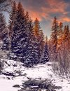 Wonderful winter landscape. snow covered pine tree over themountain river under sunlight Royalty Free Stock Photo