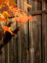 Wood background with autumn leaves Stock Images