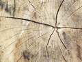 Wood background of old narrow planks of Stock Images