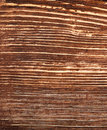 Wood background sample fibers Stock Images