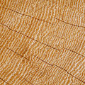 Wood background texture section of cracked hardwood growth rings concentric Stock Photos