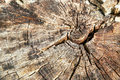 Wood Background (texture) Of T...