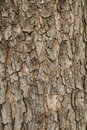 Wood Bark Stock Photos