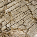 Wood bark background of natural Stock Image