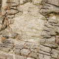 Wood bark background of natural Royalty Free Stock Images