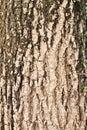 Wood bark outer surface background, cracked, grunge Royalty Free Stock Photo