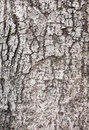 Wood bark texture Royalty Free Stock Images