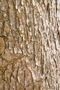 Wood bark texture able to use as background Royalty Free Stock Photos
