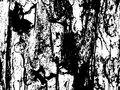 Wood bark texture. Aged texture of timber board. Distressed overlay for vintage effect.