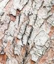 Wood bark texture close up Stock Photography