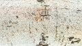 Wood bark texture close up background Stock Photo