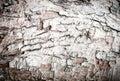 Wood bark texture close up background Stock Photos