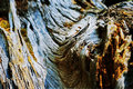 Wood bark texture of tree trunk shallow depth of field Royalty Free Stock Photos