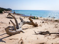 Wood in the beach baia chia on sardegna italy Royalty Free Stock Photo