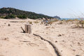 Wood in the beach baia chia on sardegna italy Stock Photography