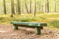 Wood bench in the summer forest Royalty Free Stock Photo