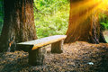 Wood bench in the summer forest at sunny day Royalty Free Stock Images