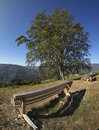 Wood bench and tree Royalty Free Stock Photo